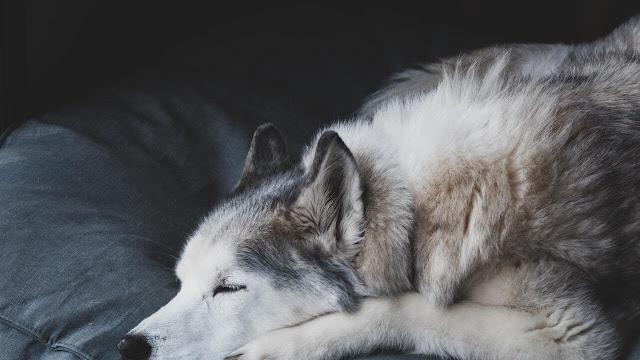 Sleep Time of Senior Dogs