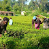 Why Farmers Don't Benefit From Agric Research Institutes