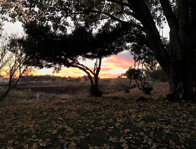 Uma lufada de romantismo by filipe correia final de dia outono folhas caídas