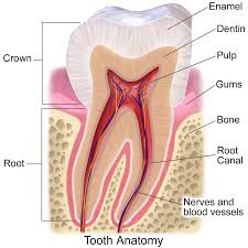 root-canal-treatment-information-in-hindi