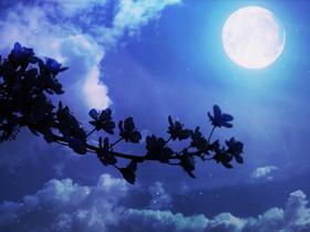 青い夜(素材)