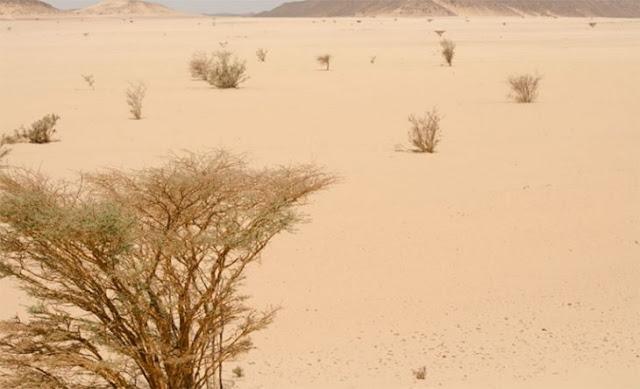 ¿Que el cambio climático es mentira? Sudán podría ser el primer país inhabitable del mundo