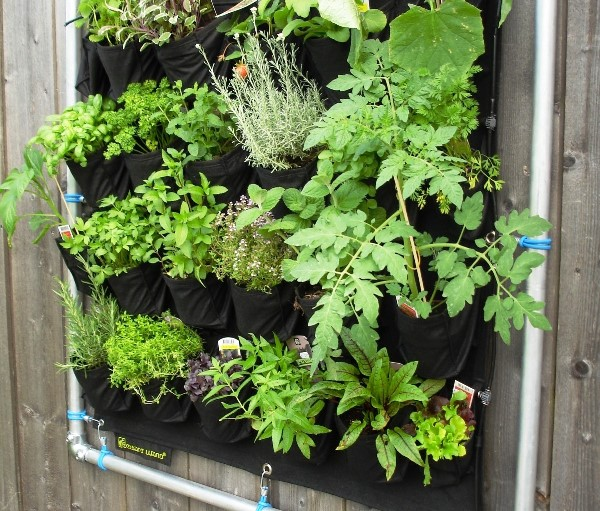 Vertikal Garden dengan sistem hidroponik