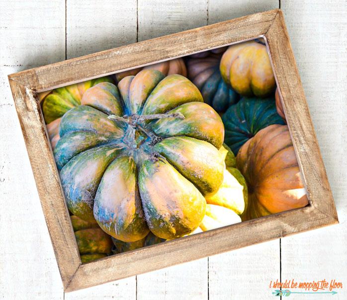Free Pumpkin Photography to Print