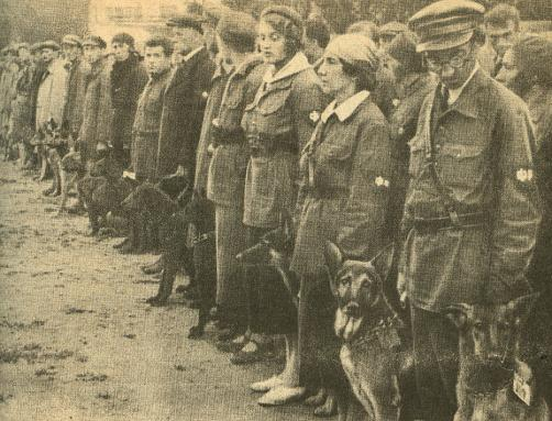 Anti-tank dogs: Dogs were used as suicide bombers during World War II