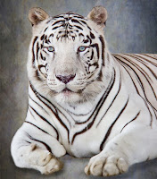 White Tiger and Grand Illusions at Magic Beyond Belief