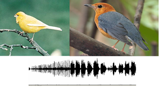 Download Kumpulan Mp3 Suara Kicau Burung Terbaru 2015
