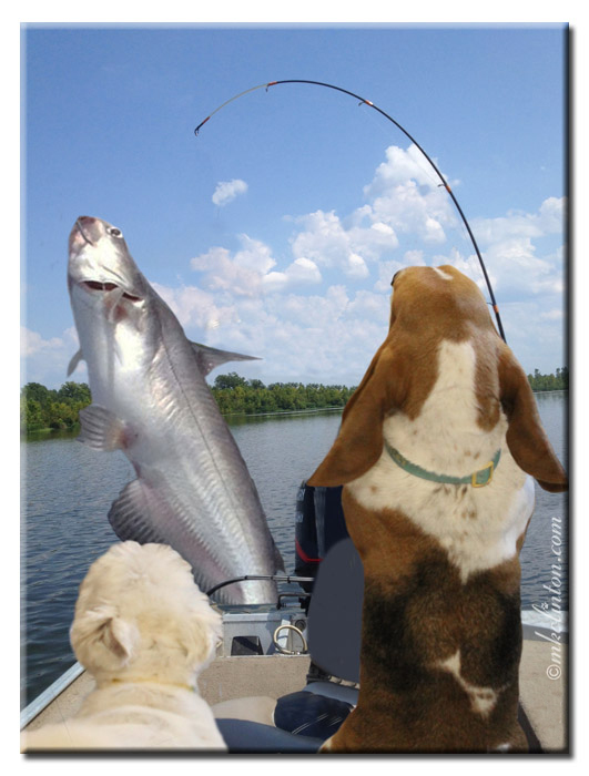 Bentley Basset Hound with huge fish on his pole