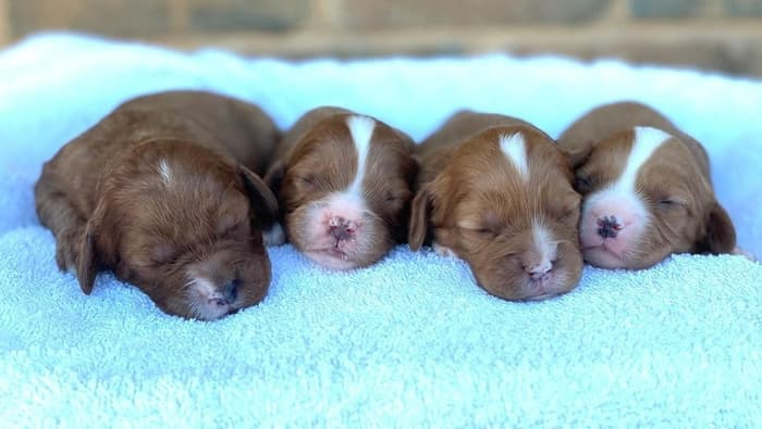 How to get a puppy to sleep through night