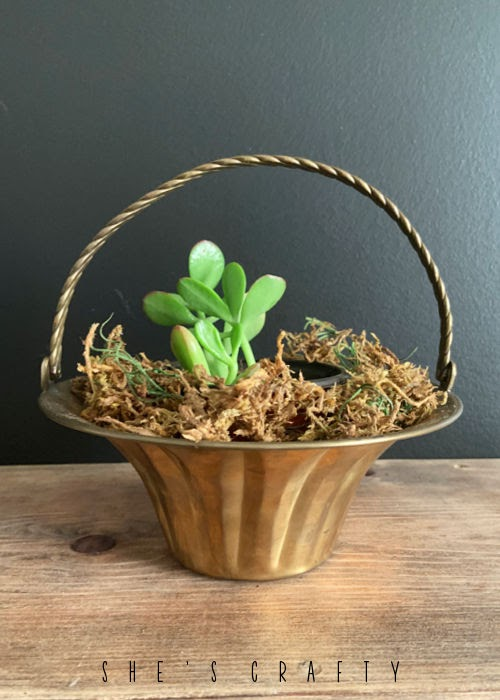 Brass basket from the thrift store holding houseplants.