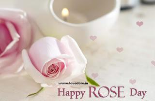 white rose image download