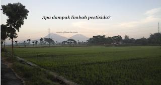 sawah, limbah pertanian, limbah pstisida
