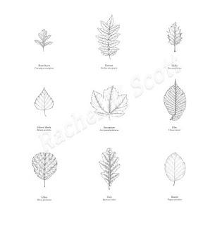 Leaves: A series of 9 stipple illustration by Rachel M Scott