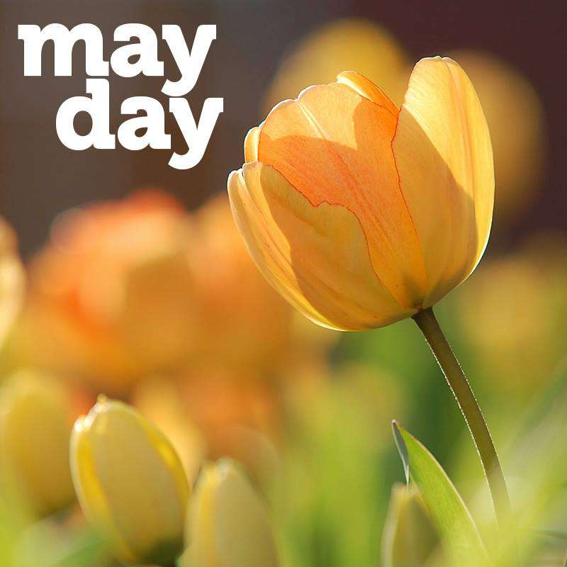 May Day Wishes Unique Image