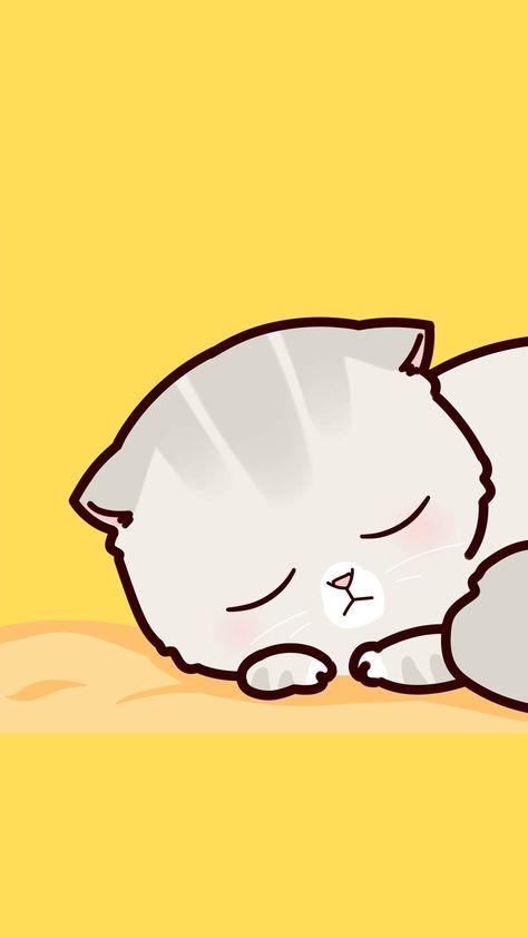 Hình nền điện thoại mèo dễ thương và ngộ nghĩnh