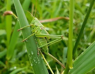 Locust Plague and Treatment