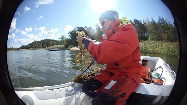 Pelastautumispukuinen henkilö kumiveneessä tarkastelee harassa olevia kasveja