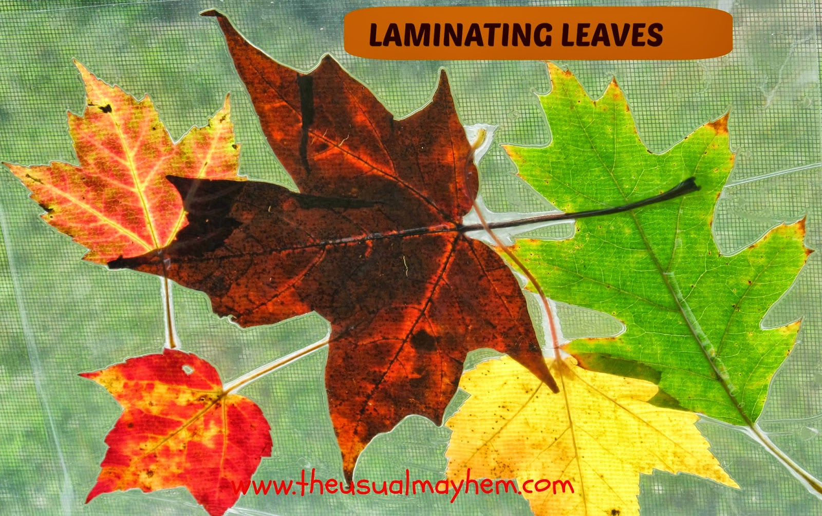 Fall Laminated Leaf Placemats And Window Decorations The Usual Mayhem