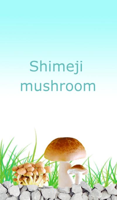 Changing of mushroom (Bunashimeji)