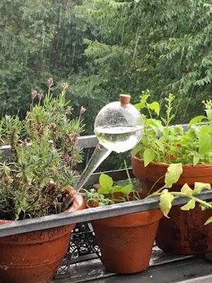 Pflanzen im Regen und Eiffelturmminiatur