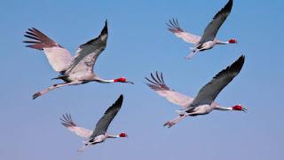 आकाश में ऊंचाई पर उड़ते हुए पक्षियों की छाया पृथ्वी पर नहीं दिखाई देती हैं, क्यों ?