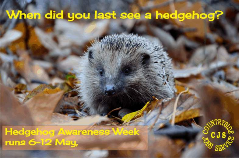 5319fdcf0 Hedgehogs. Why can't they just share the hedge?