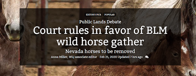 The Westerner Court Rules In Favor Of Blm Wild Horse Gather
