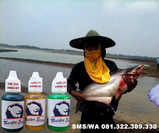 Essen Untuk Umpan Ikan Patin