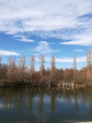 Patke se dosađuju na jezeru
