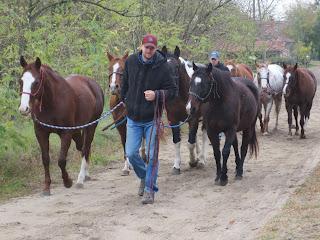 Unkari, El Bronco, ratsastusmatka, lännenratsastus