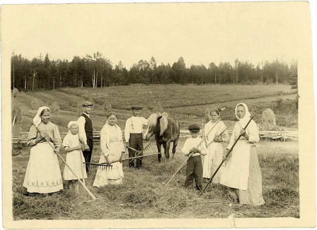 mustavalkoinen kuva miehist, naisista ja lapsista pellolla. Naisilla pitkän hameet, esiliinat ja huivit päässä. Miehillä  suorat housut ja joillakin liivit päällä. Osalla ihmisistä on  haravat kädessä.