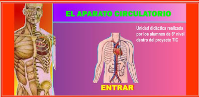 http://www.ceiploreto.es/sugerencias/averroes/manuelperez/udidacticas/udanatomia/circulatorio/index.htm