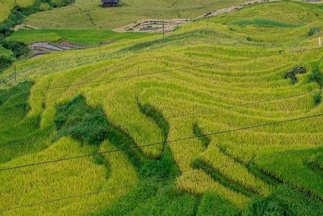 Ngắm cảnh sắc 'thiên đường' ruộng bậc thang hùng vĩ ở Y Tý Lào Cai 7