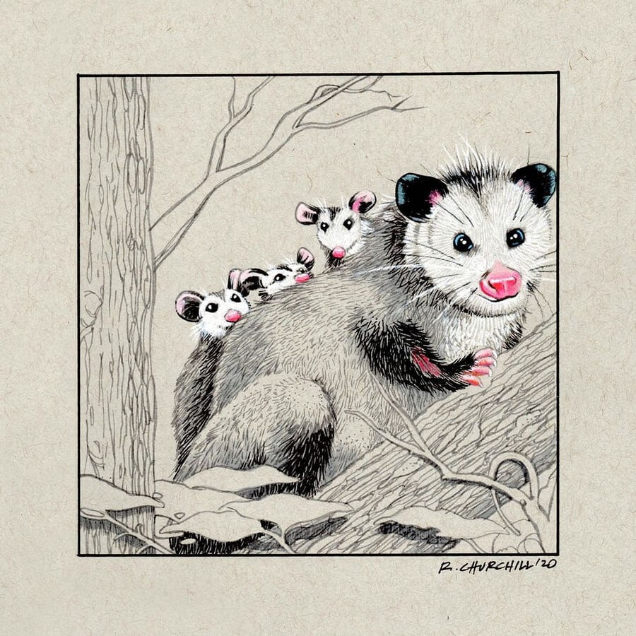 09-Playing-possum-Ron-Churchill-www-designstack-co