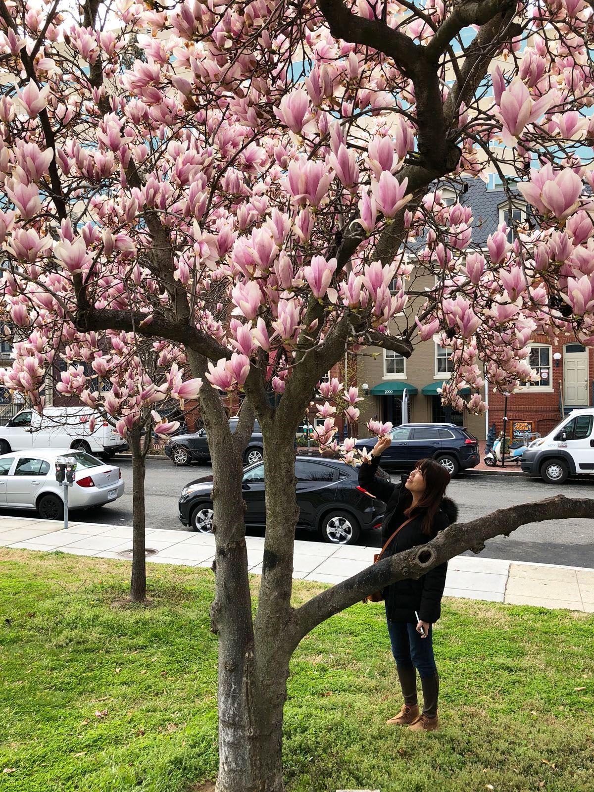 PUTIEN Peach Colorful Boys and Girls Soft Short Sleeve T-Shirt,Japanese Scenery Sakura