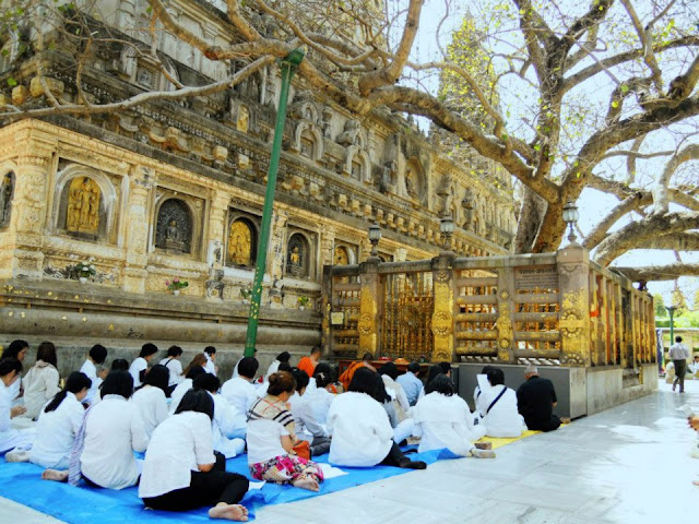 The Bodhi tree at the Mahabodhi Temple, Bodhgaya. Prince Siddhartha sat under this tree and attained Buddhahood in 623 BCE. The current tree was planted in the 19th century, from a sapling brought from the Bodhi Tree in Anuradhapura, Sri Lanka.
