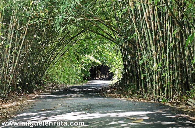 Bosque-Bambú-Bali