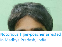 https://sciencythoughts.blogspot.com/2019/10/notorious-tiger-poacher-arrested-in.html