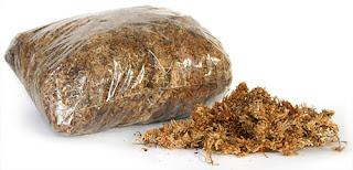 Spagnum (Moss)