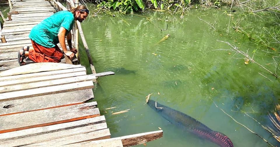 Ikan Arwana 1 Miliar Terbesar Termahal Tercantik Terbaik Terindah Di Dunia Blacan Com
