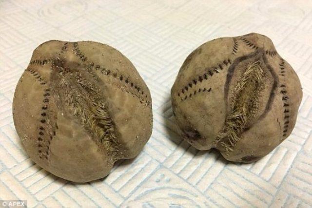 Los extraños huevos encontrados en playas inglesas
