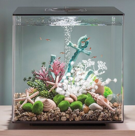 Small Ready Decorated Aquarium Tanks for your Home