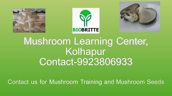 Mushroom Spawn in Kagwad | Mushroom Learning Center Kolhapur
