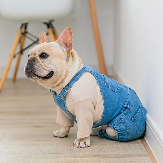 Quần áo cho thú cưng