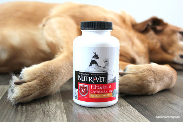 How #NutriVet Helps My Dog With Hip Dysplasia & Arthritis