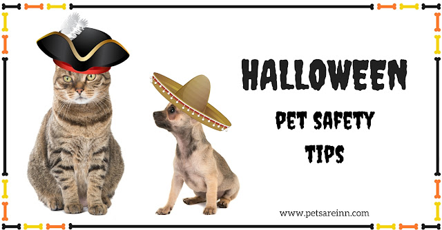 pet safety tips on halloween
