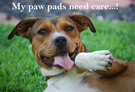Caring for your dog's paw pad is of utmost importance