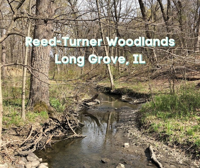 Wildflower Loving, Ravine Gazing and Hiking Along a Lake at Reed-Turner Woodlands in Long Grove, Illinois