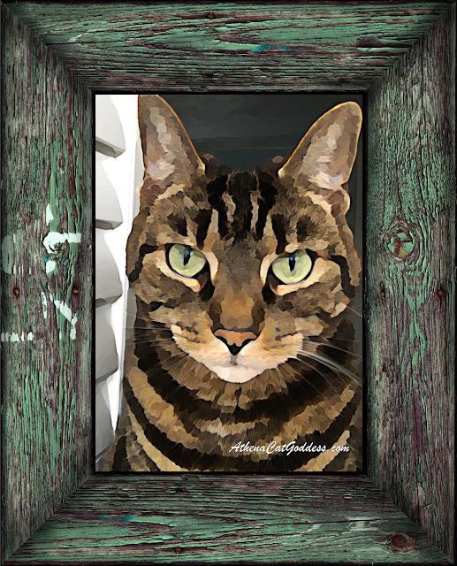 tabby cat watercolour