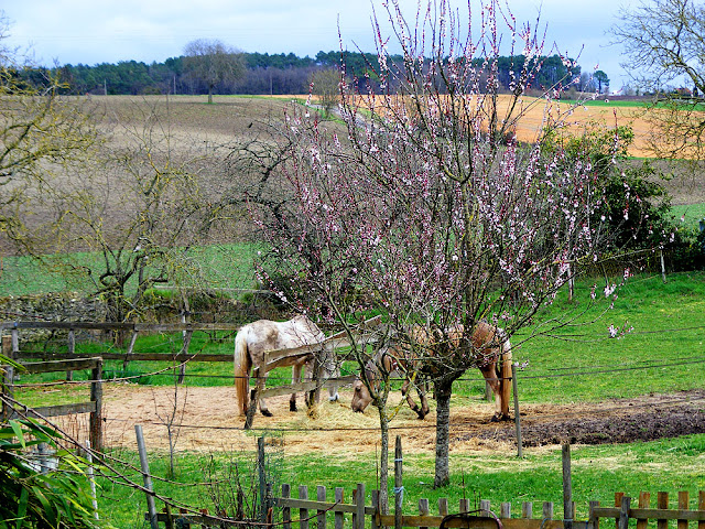 Horses and blossom.  Indre et Loire, France. Photographed by Susan Walter. Tour the Loire Valley with a classic car and a private guide.